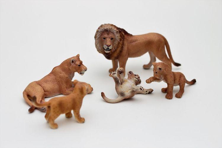 Schleichtiere Lionsfamily Childrens Toys Hartgummi Spielzeug Kinderspielzeug Schleich Animals Schleich Tiere Schleich Toys Schleichtiere Schleichtiere Lionfamily Schleichtiere Lions Schleichtiere Löwe Spielzeugfotografie Toy Animals Toys White Background