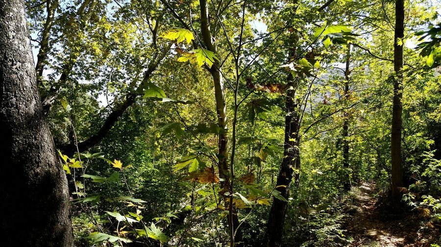 First Eyeem Photo Jungle Footpath Sycamore Green Nature