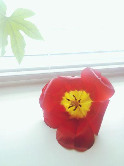 Flower Vsc