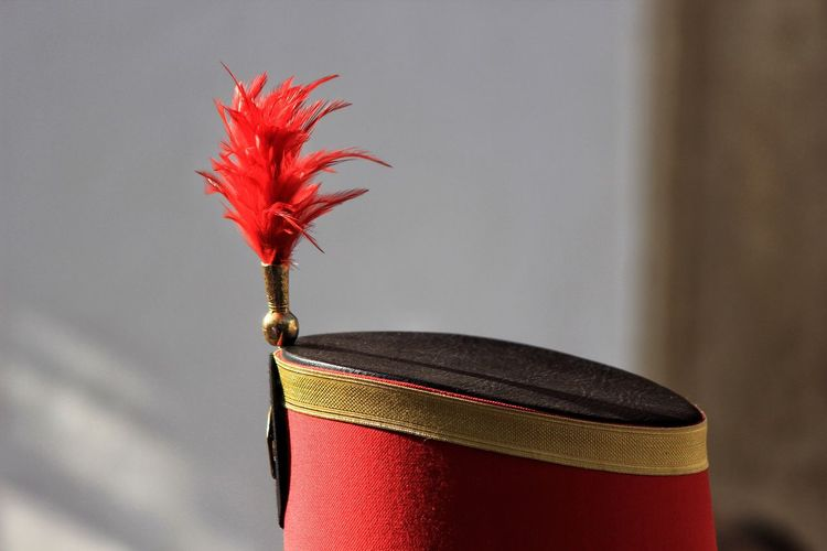 Red Close-up Gold Colored Feather  Red Feather Hat With Feather Hat And Feather Red Hat Headwear Hat Traditional Clothing Red And Gold Hat Red Headwear Red Color Feather Collection Red Feathers Official Headwear Spanish Heritage Spanish Headwear Easter Easter2017 Easter Parade Easter Parade 2017 San Roque San Roque Easter