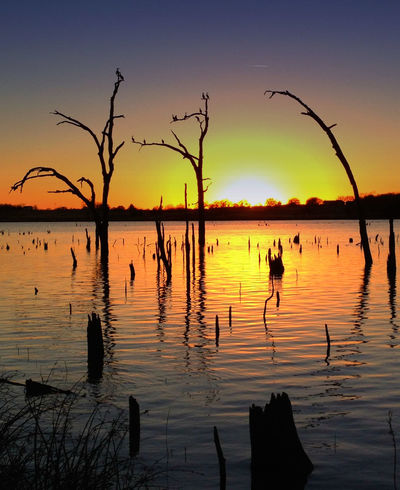 Beauty In Nature Day Estuary Lake Nature No People Outdoors Reflection Roosting Scenics Silhouette Sky Stumps Sunset Tree Water