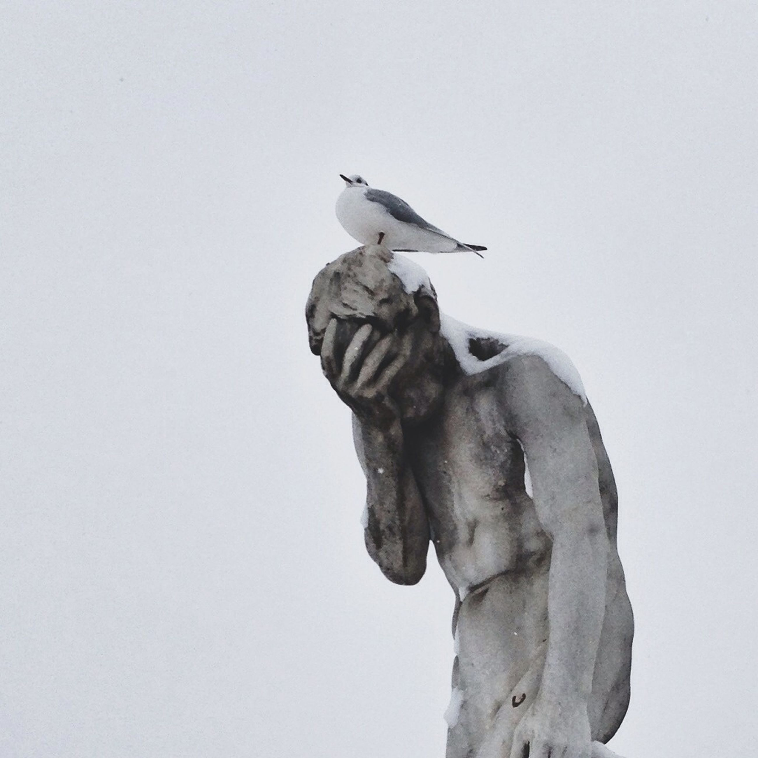 clear sky, animal themes, low angle view, bird, animals in the wild, wildlife, statue, copy space, sculpture, human representation, one animal, art, art and craft, perching, day, no people, outdoors, creativity, two animals