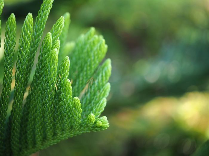 Nature Nature Green Color Outdoors Leaf