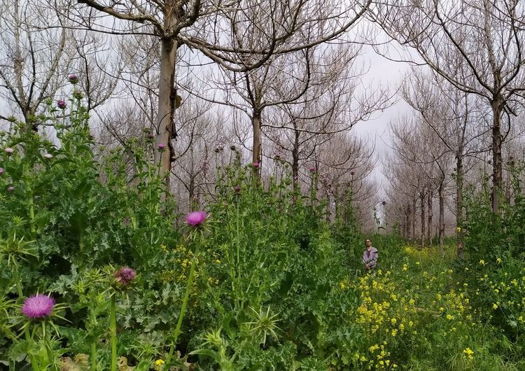 Flowering plants and trees in forest