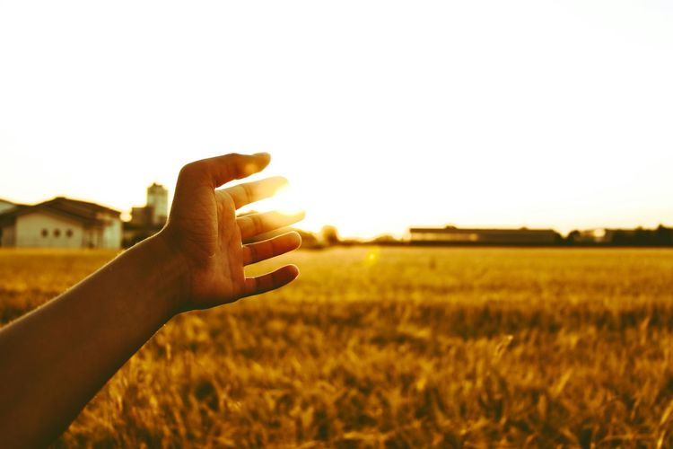 Golden hour Field Sunset Outdoors Nature Sunlight Sky Photographing Rural Scene Human Hand Golden Hour Goldenlight Sun Human Body Part One Person People Adult Communication Portable Information Device Holding Photo Messaging Adults Only Day Photography Themes First Eyeem Photo