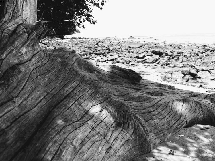 HuaweiP9 Huaweiphotography Leica Lens Kuantan Pahang No People No Filter Non-urban Scene Black And White Monochrome Heat - Temperature Malaysia Sea Beach Sand Textured  Close-up Horizon Over Water Sky Pebble Beach Driftwood Rugged Dead Tree Dead Plant Fallen Tree Geology Rock Formation Tide Pebble Shore Rock