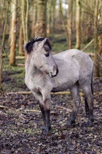 Horse standing in forest