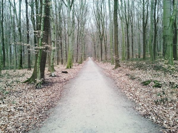 Walk throuhh the Forest of Werne A.d. Lippe in Autumn... Nature