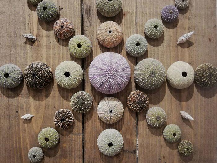 Sea urchins arranged on table