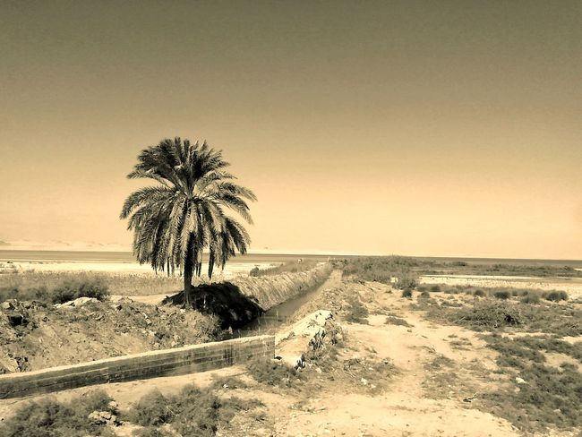 Palm Tree Lakeshore Nature Tranquil Scene Tranquility No People Sand Beauty In Nature Scenics Sky Outdoors Water Day Travel Destinations This Is Egypt ❤ Egyptphotography Egyptian Art Fayoum Egypt Tranquility Beauty In Nature Nature Motion Spectacular Scenery Photogtaphyinmotion