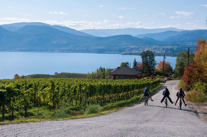 Visiting wineries by bikes Okanagan Valley Okanagan Bike Wine Travel Explore Penticton Winery Lake Mountains Trail British Columbia Canada Friends Happy