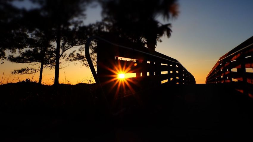 Bridge Jeff Woytovich Brıdge Bridges Sunset Silhouette Sun Lens Flare Nature Sky Tree No People Outdoors Sunlight Beauty In Nature Day Architecture Scenics Growth Built Structure Summer Exploratorium