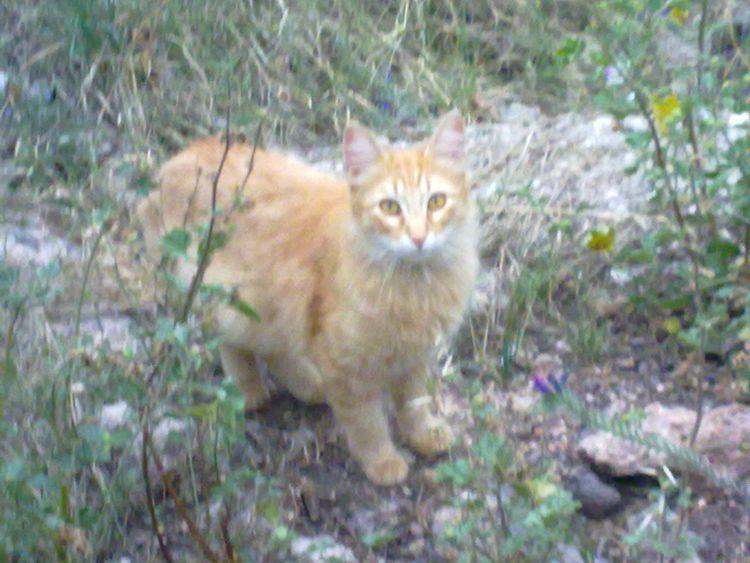 Gatito Aninallovers Cute Dog  Catcatcat