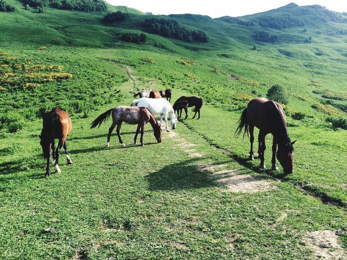 Georgia Horses