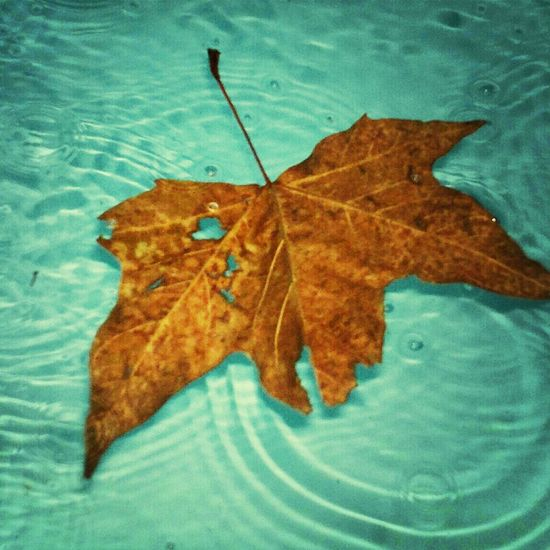 Colors Of Autumn Fall Beauty Autumn Leaves Ripple Pool Leaves