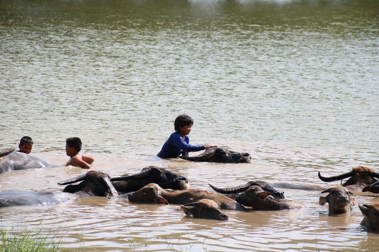 People swimming in lake