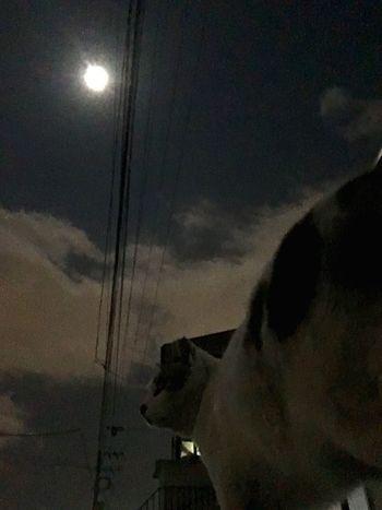 Stray Cat 夜ねこ Moon