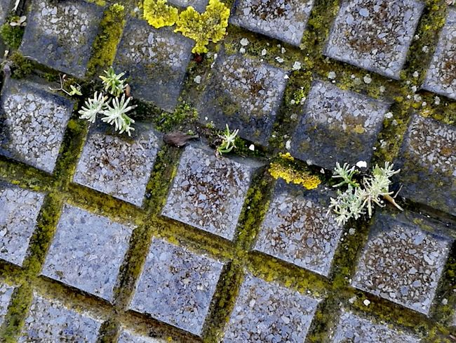 Backgrounds Full Frame Pattern Tile Tiled Floor Cobblestone High Angle View Close-up