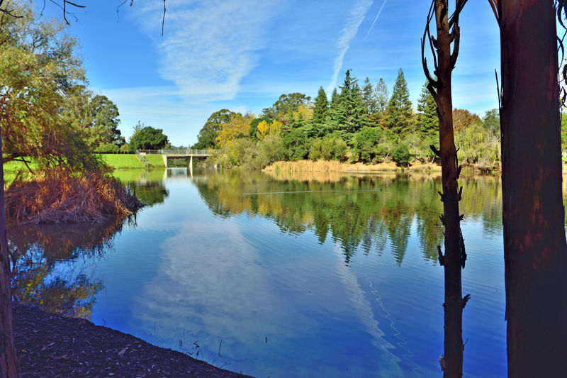 San Lorenzo Creek Reservoir 4 Don Castro Park Eastbay Regional Park District Hayward, Ca. Autumn Colors Fall Lake Lakeview Nature Scenic Scenic Beauty Beauty In Nature Trees Water Reflections Reflections In The Water Reflected Glory Reflection_collection Schrubs Lakes Bank Overpass Landscape Landscape_lovers Landscape_photography Landscape_Collection Tranquility