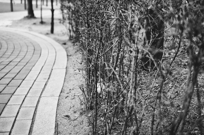 Blackandwhite Streetphotography Load