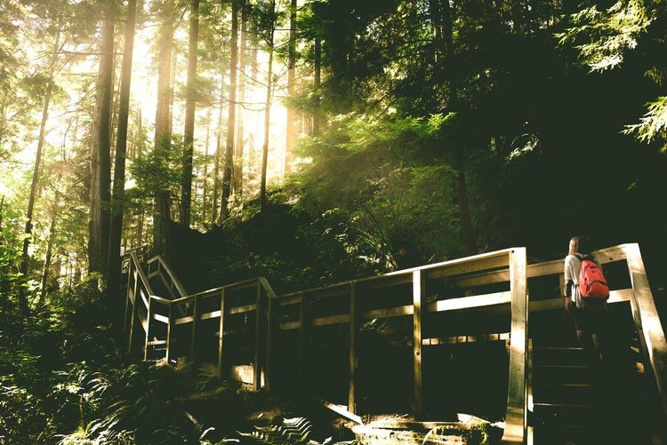 Tree Railing Sunlight Real People Outdoors Forest Nature Day One Person People