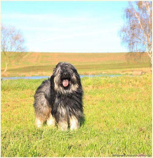 Landscape Gos D'atura I Love My Dog Mydog Bentjesgosaugustin Dog Dog Walking Ilovemydog