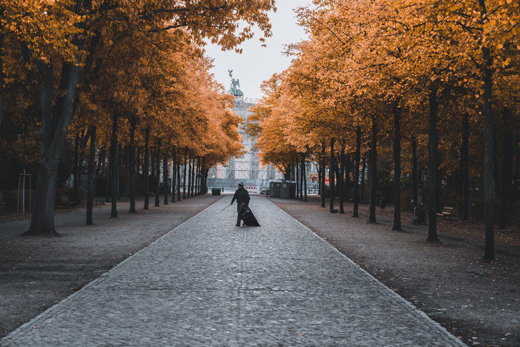 Autumn Autumn Collection Brandenburger Tor Brandenburgertor Change Day Diminishing Perspective Direction Footpath Full Length Growth Lifestyles Nature One Person Orange Color Outdoors Park Plant Real People The Way Forward Tree Treelined Walking