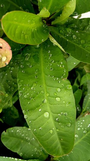 Leaf Green Color Drop Water Nature Freshness Close-up Plant No People Beauty In Nature Fragility Day Outdoors