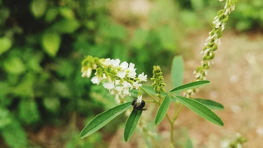 flower Flower Flower Head Insect Leaf Close-up Animal Themes Plant