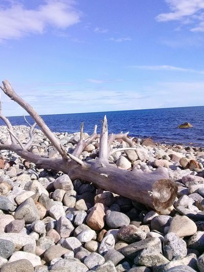 Beach Sea Sky Water Nature Beauty In Nature No People Day Norway Travel Tree