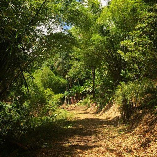 Ilivewhereyouvacation Bamboo Grenada Bushments Caribbean_beautiful_landscapes IPhone Westindies_landscape Wu_caribbean Ig_caribbean
