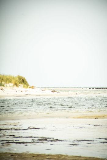 Auszeit an der Ostsee 2018 Nature Naturschutzgebiet Ostsee Ostseeküste Scenic Urlaub Aquatic Sport Beach Beauty In Nature Clear Sky Day Horizon Over Water Land Motion Nature No People Outdoors Reisen Scenics - Nature Sea Sky Sport Surface Level Tranquil Scene Tranquility Water Wave