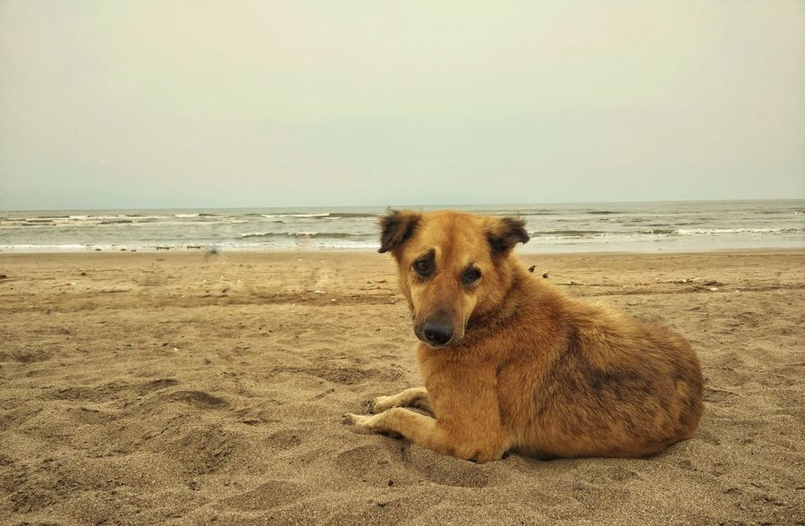 Mumbai India Outdoors No People Day Dog Photography Adventure Dog Street Photography Street Dog Dog❤ Animal Themes Furry Dog Dog On The Beach Dog On Beach Dog Chilling On A Hot Day Dog Chilling In The Sun