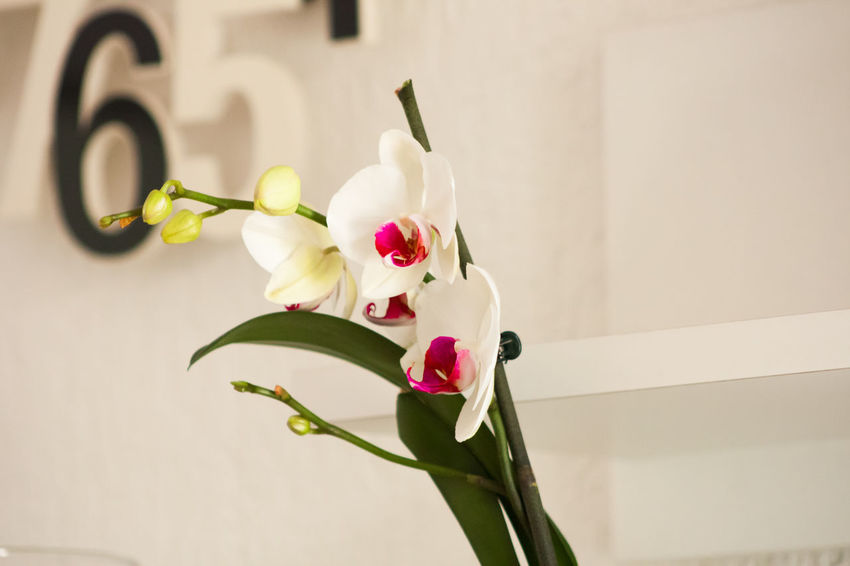 Beauty In Nature Flower Flowers Home Is Where The Art Is Leaf Nature No People Orchids Pink Plant