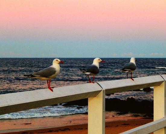 Hanging Out Seaside Birdgang Beautiful Sky Beachlife Just Australia Pure Joy