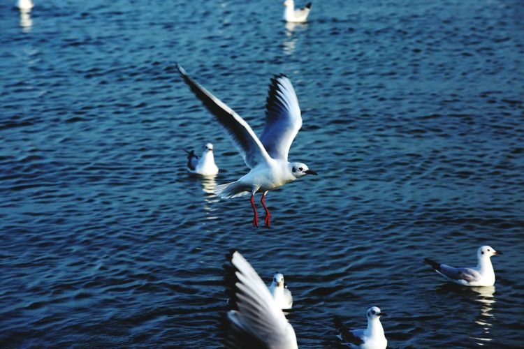 View of seagulls in blue rippled water