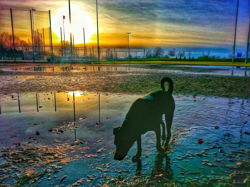 Softball Fields EyeEm Masterclass EyeEm Best Shots Eyem Best Edits EyeEm Nature Lover Taking Photos Hanging Out Sunset_collection Sky And Clouds Getting Inspired Skyporn Discover Your City Popular Photos Walking Around Enjoying Life Nature How's The Weather Today? Sun_collection Sunset Silhouettes My Dog Is Cooler Than Your Kid. Visual Feast
