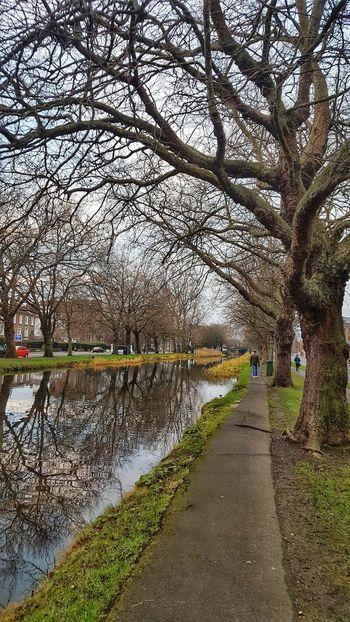 Morning Trees City Cities Of Europe Dublin Ireland Path Kanal Morningrun