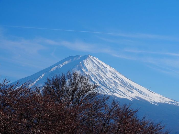 Trees Mount FuJi Cold Temperature Snow Sky Mountain Scenics - Nature Beauty In Nature Tranquility Tranquil Scene Nature Blue Snowcapped Mountain No People Day Environment Mountain Peak Tree