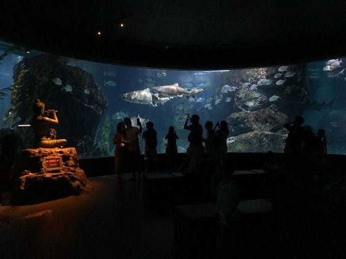 Water Animals In The Wild Animal Themes Animal Sea Aquarium Tank Fish Underwater Watching Swimming Illuminated Group Of People Nature Vertebrate Transparent Animals In Captivity Animal Wildlife Indoors  Glass - Material