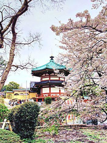 Architecture Beautiful Landscape 上野