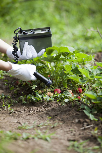 Measuring radiation levels of fruits in a garden. Detecting radioactivity of strawberries. Agriculture Contamination Fragaria Healthcare Measuring Radioactive Contaminated Nature Danger Food Security Fruit Fruits Gardening Geiger Counter Growth Hand Instrument Of Measurement Ionizing Radiation Nature One Person Plant Radiation Radiation Levels Radioactivity Strawberries Strawberry