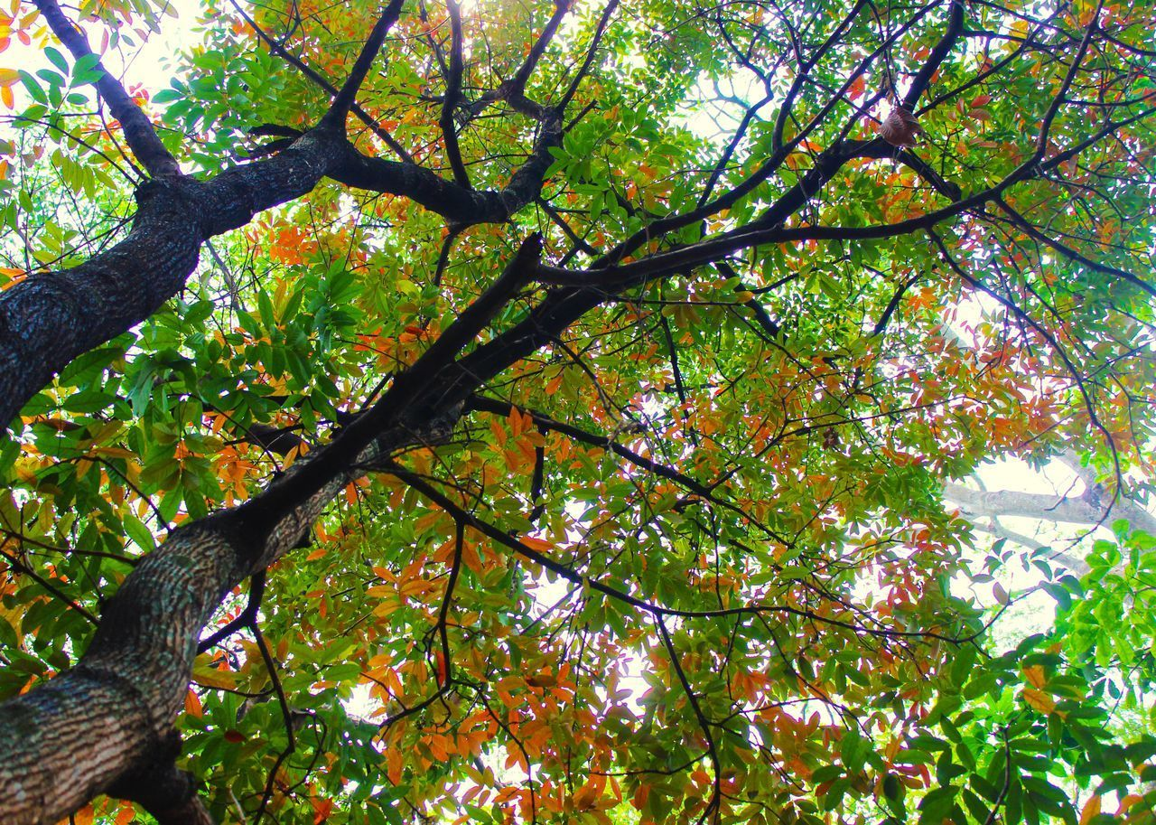 LOW ANGLE VIEW OF TREE AGAINST AUTUMN LEAVES