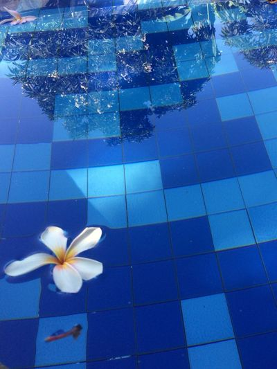 Swimming Pool Flower Vacations Travel Destinations IPhoneography Bali