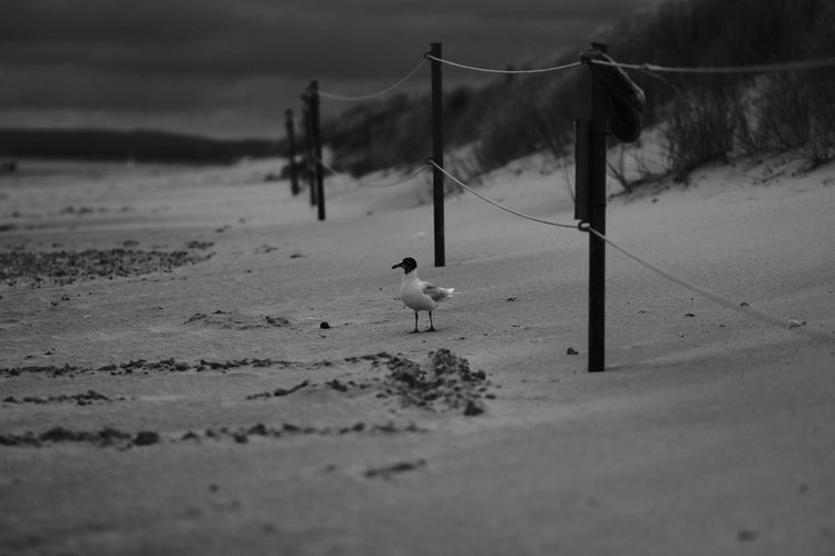 Animal Themes Sand Nature One Animal Selective Focus Snow Beach Outdoors Animals In The Wild Day Winter Mammal Domestic Animals No People Cold Temperature Bird Beauty In Nature Sky
