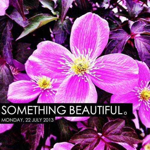 Photooftheday InstaCC Instaccsthd7 Makemesmile Somethingbeautiful K8marieuk Photo365 Flower Flowers Purple Purpleflower Flowersofig Flowersofinstagram Cameraplus Nottinghamshire