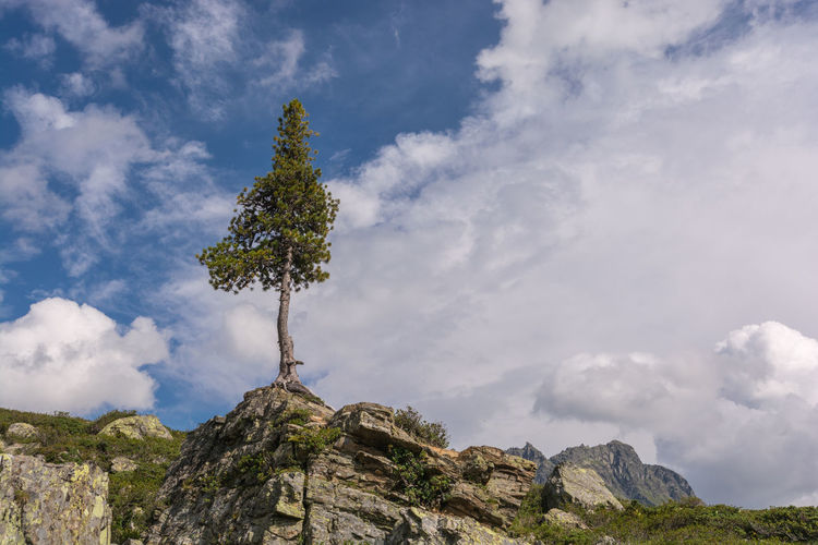 Einsamer Baum / Lonesome Tree Alps Beauty In Nature Blue Cloud Cloud - Sky Cloudscape Cloudy Day Green Growth Low Angle View Majestic Mountain Nature Non-urban Scene Outdoors Rocks Scenics Sky Solitude Tall - High Tranquil Scene Tranquility Tree Tree Trunk