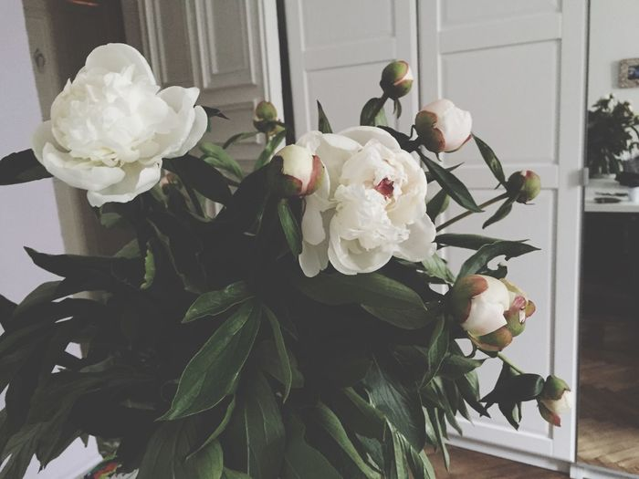 Пои пионы! пион пионы Пионылюбимые пионысамыекрасивые Peonies Peonie Peonie Bush Peonies Bloom Peonies Bloom In The Room Provence Room Room Decor Flower Flowers Flower Collection Flowers,Plants & Garden