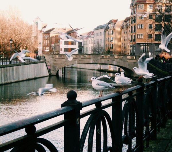 River Seagull Bird Berlin Building Exterior Architecture Built Structure Water River Outdoors Railing Day City Nature Bridge - Man Made Structure Bird No People Animal Themes Sky Stories From The City Visual Creativity Adventures In The City