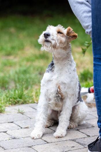 Full length of dog sitting on man looking away